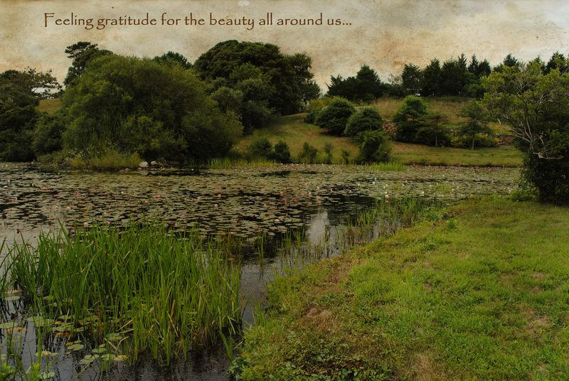 Photo Txtures Gratitude